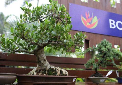 bonsai-005