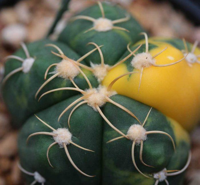 cacti-misc-003
