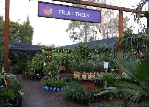 fruit-wide-002