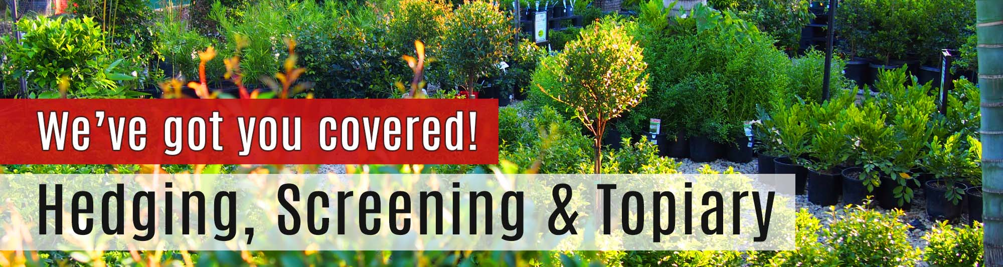Screening & Hedging Plants