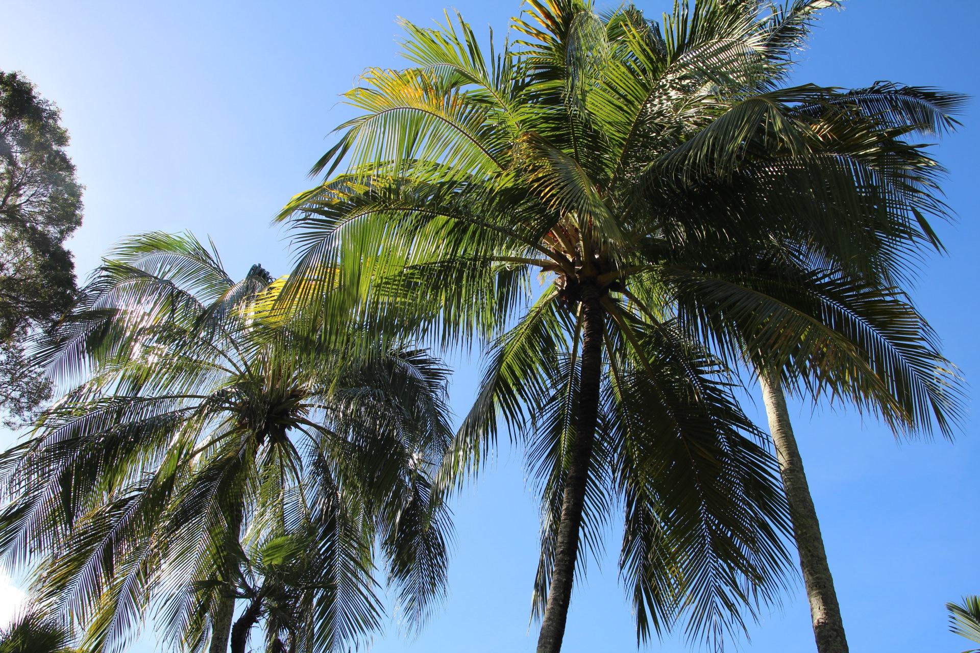 coconut10