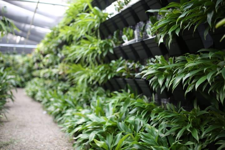 greenwall-001