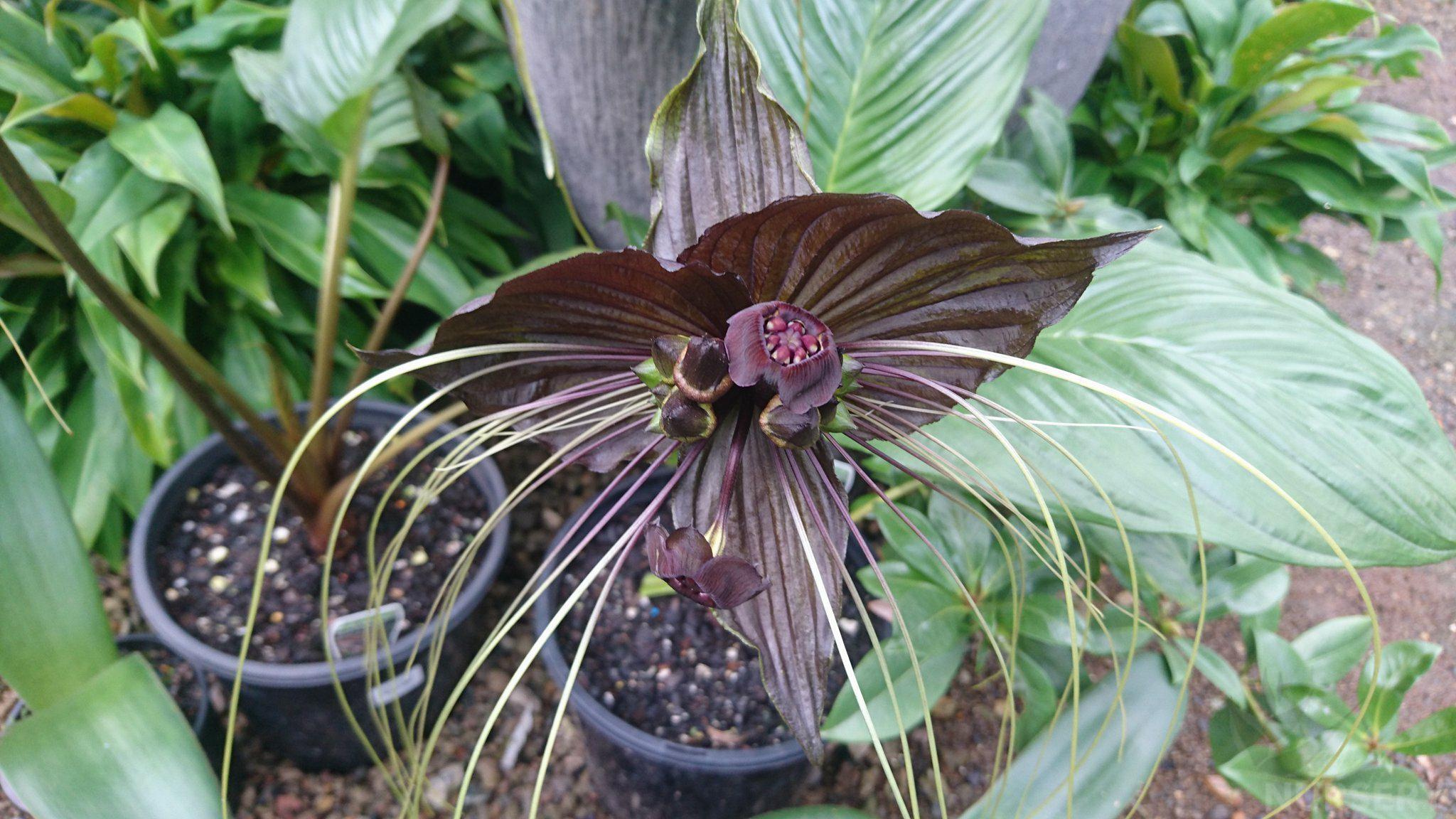 bat-plant-003