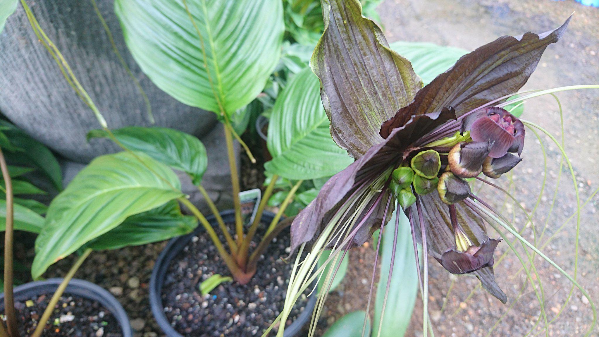 bat-plant-004