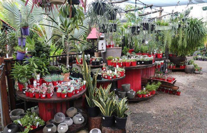 cactiandsucculents004