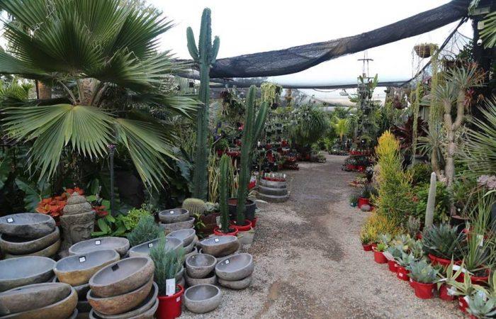 cactiandsucculents005