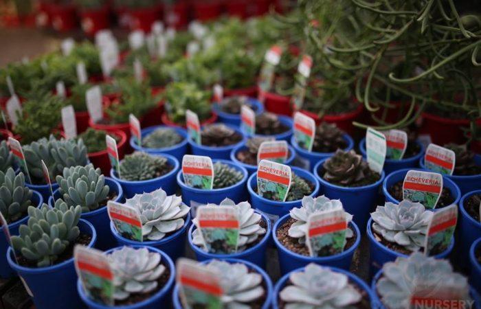 cactiandsucculents006