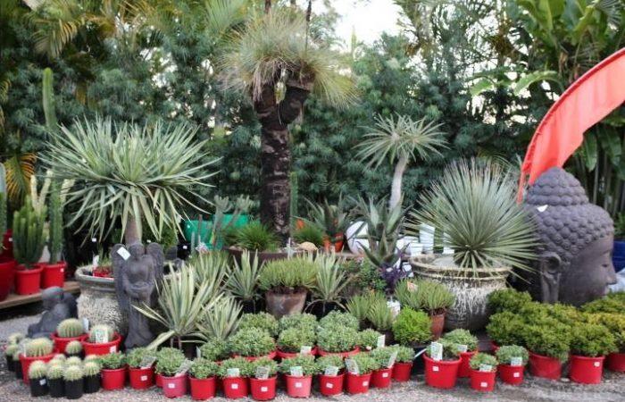 cactiandsucculents007